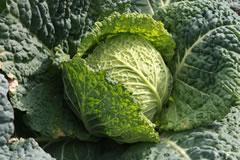 当園の冬野菜(一部)